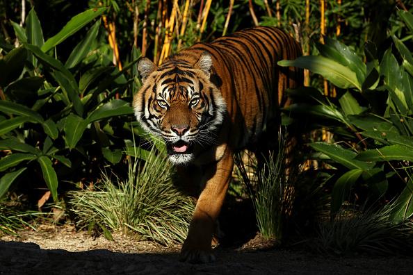 Animal「Animals Enjoy Easter Treats At Taronga Zoo」:写真・画像(1)[壁紙.com]