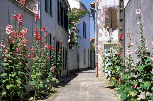 Nouvelle-Aquitaine「Hollyhocks in alleyway of village, Charente, France」:スマホ壁紙(0)