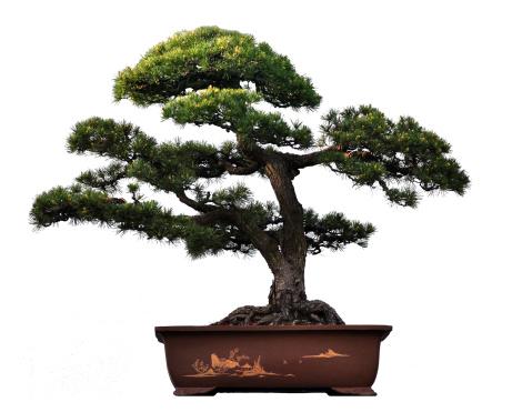 Planting「Potted plant」:スマホ壁紙(9)