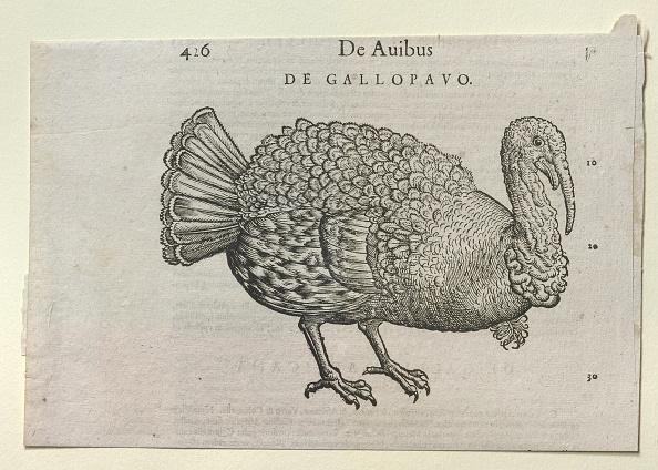 Tail「A Turkey」:写真・画像(16)[壁紙.com]