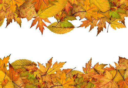 かえでの葉「秋のフレーム」:スマホ壁紙(19)