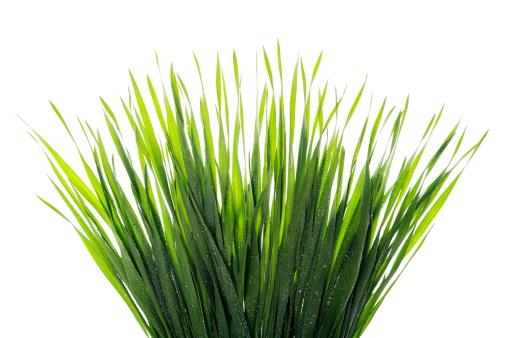Blade of Grass「Water Droplets on Grass」:スマホ壁紙(17)