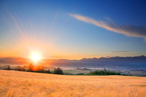 Hokkaido「Wheat and barley fields」:スマホ壁紙(11)