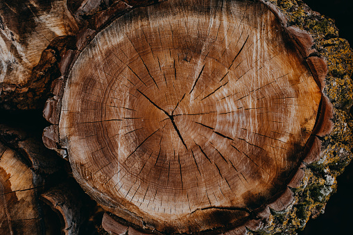 Log「Texture of wooden log」:スマホ壁紙(7)
