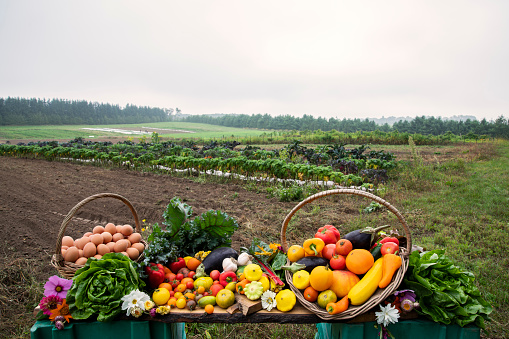 Real Life「A still life of freshly harvested organic vegetables, produce and eggs pictured on the farm they were grown on.」:スマホ壁紙(19)