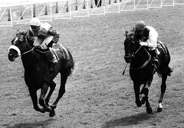 Racehorse「Horseracing」:写真・画像(9)[壁紙.com]