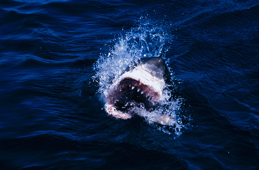 Aggression「Shark with open mouth on the water surface」:スマホ壁紙(7)