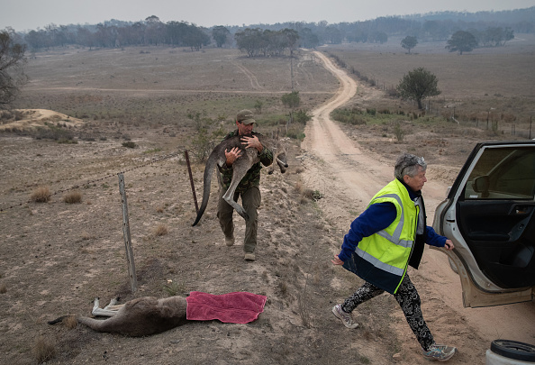Animal「The Survivors: Saving Australian Wildlife Following Fires And Drought」:写真・画像(16)[壁紙.com]