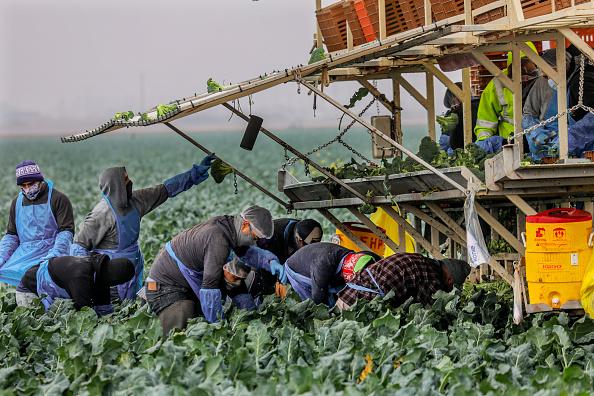 Broccoli「President Biden Signs Executive Orders On Immigration」:写真・画像(14)[壁紙.com]