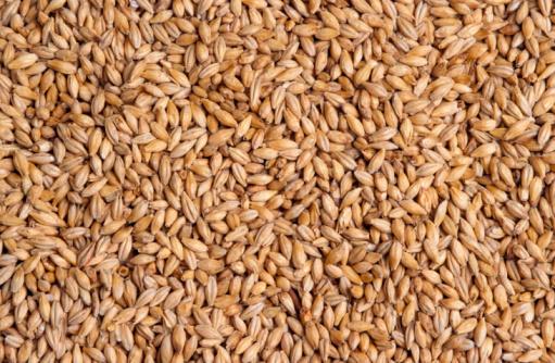 Barley「Barley Grains」:スマホ壁紙(0)