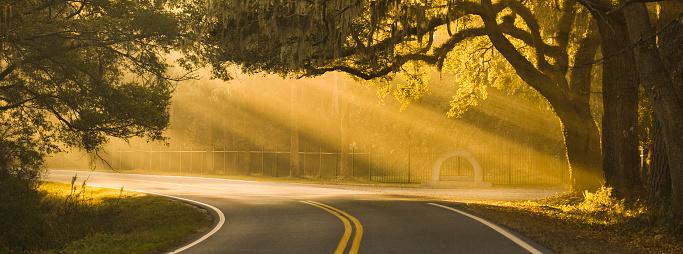 South「Panorama sunlight rays shine through oak trees on a road in Savannah Georgia USA」:スマホ壁紙(14)