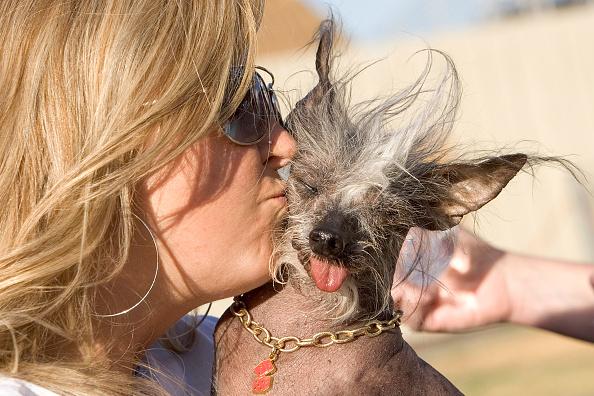 David Paul Morris「Furry Friends Vie For Title Of Worlds Ugliest Dog」:写真・画像(16)[壁紙.com]
