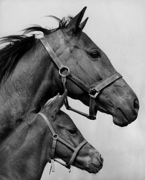 Racehorse「Asturia And Filly」:写真・画像(0)[壁紙.com]