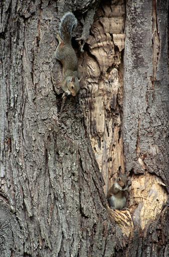 Gray Squirrel「Gray Squirrel」:スマホ壁紙(17)