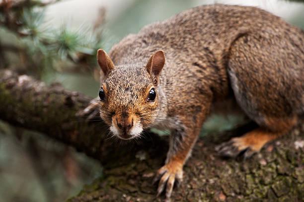 Gray squirrel in alert pose:スマホ壁紙(壁紙.com)