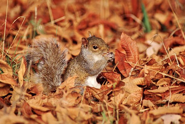 Gray Squirrel Eating:スマホ壁紙(壁紙.com)
