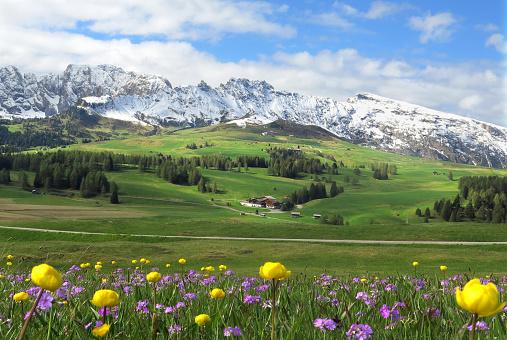 Wildflower「Springtime meadow in Alpe di Siusi」:スマホ壁紙(12)