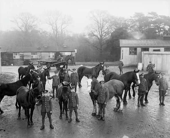 Horse「Army Animals」:写真・画像(13)[壁紙.com]