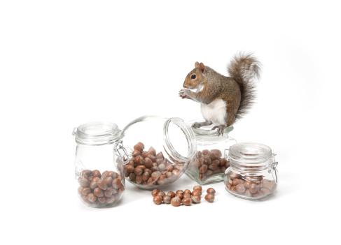 Squirrel「Squirrel with jars of nuts」:スマホ壁紙(17)