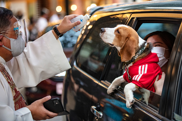 Pets「Pets Blessed By Priest At Philippines Drive-In」:写真・画像(9)[壁紙.com]