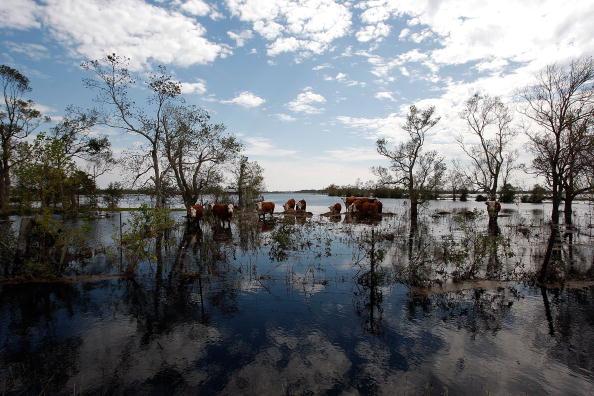 Hurricane Ike「Hurricane Ike Makes Landfall On Texas Coast」:写真・画像(8)[壁紙.com]