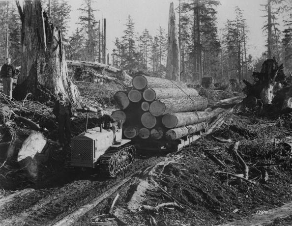 Log「Oregon Lumber」:写真・画像(4)[壁紙.com]
