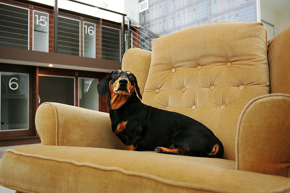 Sofa「PawPaws Dog Hotel Opens In Sydney」:写真・画像(9)[壁紙.com]
