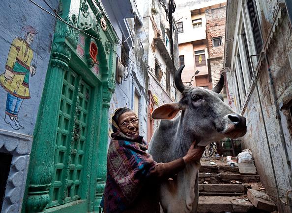 Cow「A Second Home: The Widows of Varanasi, India」:写真・画像(13)[壁紙.com]