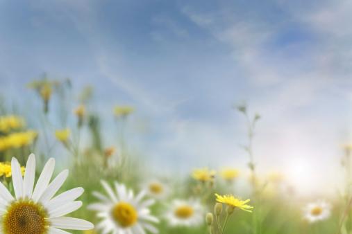 Wildflower「Summer Sunset In The Field」:スマホ壁紙(12)