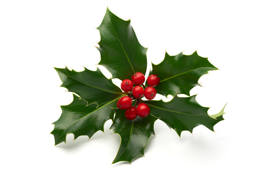 Christmas Decoration「Sprig of holly leaves and berries isolated on white」:スマホ壁紙(11)