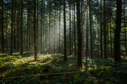 Sulking「Sunbeams in dark and foggy autumn forest」:スマホ壁紙(18)