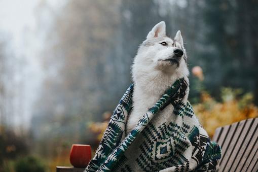 November「Dog in the morning garden」:スマホ壁紙(7)