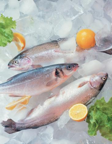 楽園「Fresh fish on ice decorated with greens」:スマホ壁紙(16)