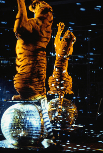 Tiger「Two tigers standing on hind legs on reflection balls」:スマホ壁紙(13)