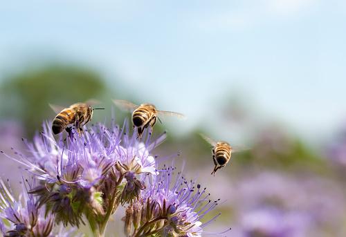 Uncultivated「Honey bee flying away」:スマホ壁紙(19)