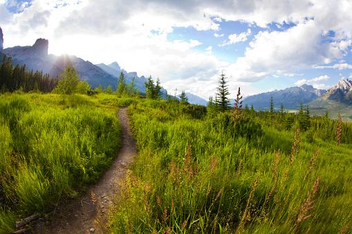 アルバータ州「山のバイカー、ハイカー、キャンモア, アルバータ州, カナダのキャンモア ノルディック センターでランナーのシングル トレイルの様子」:スマホ壁紙(8)