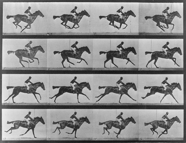 Horse「Racing study」:写真・画像(19)[壁紙.com]