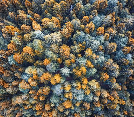 Surreal「Colorful Forest」:スマホ壁紙(9)